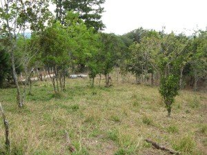 Property 1 near San Ramon with fruit trees
