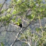 tucan in tree behind house_Small