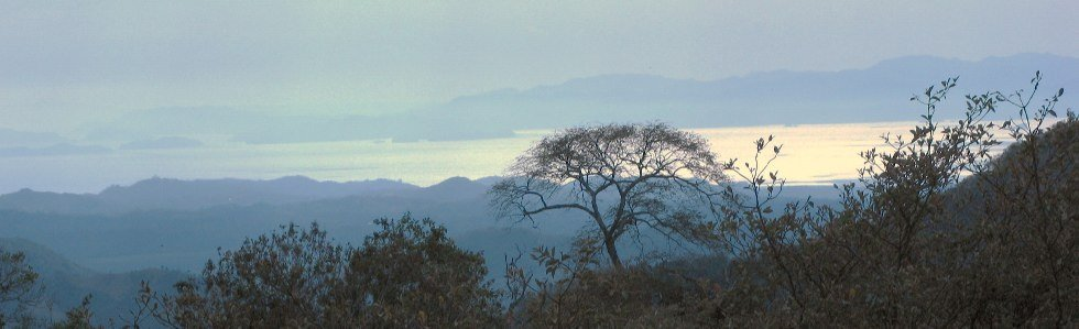 View of trees and Golfo Nicoya